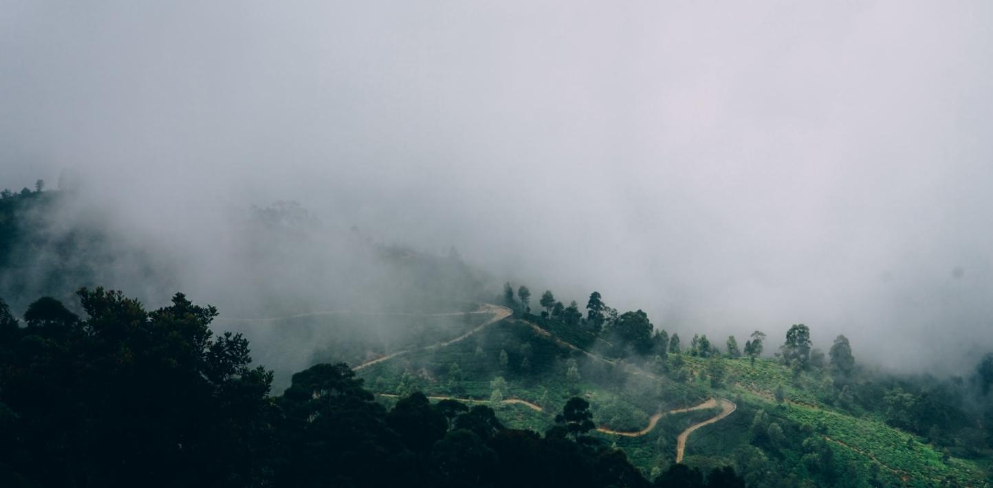 Tea plantations of SriPhoto by Vitalii Tkachenko on Unsplash Lanka